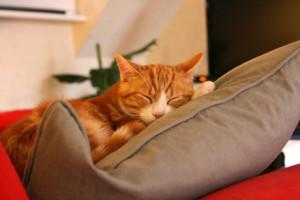 Chat roux dormant sur un coussin