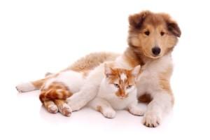 Hund und Katze liegend